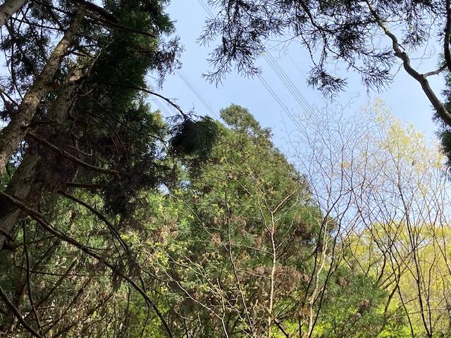 京都府南丹市山林物件 現地送電線