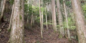 山林物件 三重県熊野市神川町
