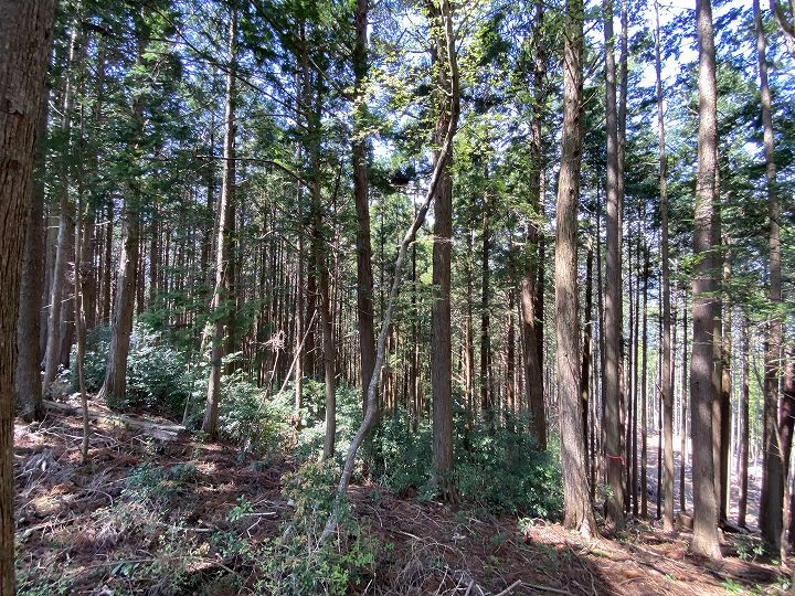 浜松市山林物件 作業道から見た現地