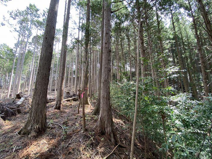 浜松市山林物件 境界目安