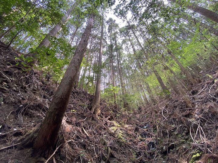 浜松市山林物件 林内の様子