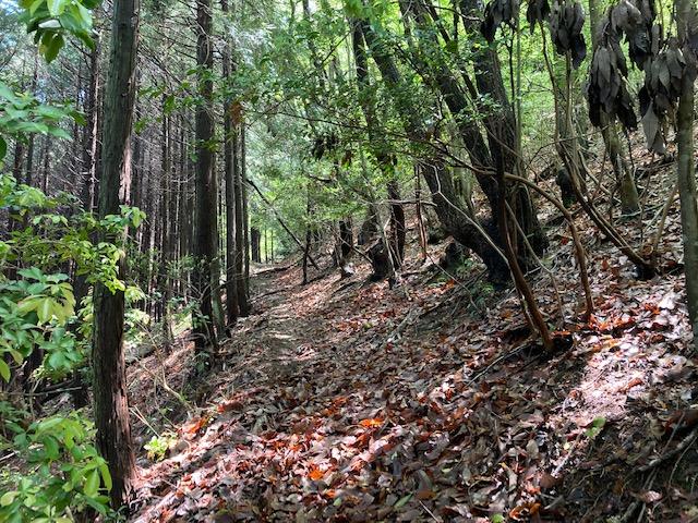 山林物件 大阪府豊能郡能勢町 西側境界