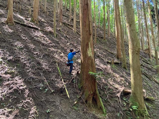 山林物件 兵庫県丹波篠山市奥山
