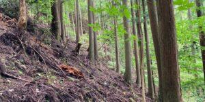 山林物件 兵庫県丹波篠山市立金