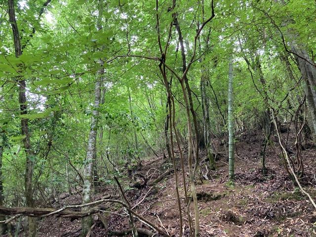 山林内の広葉樹