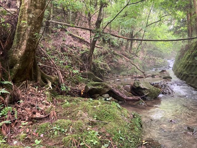 山林内の水路