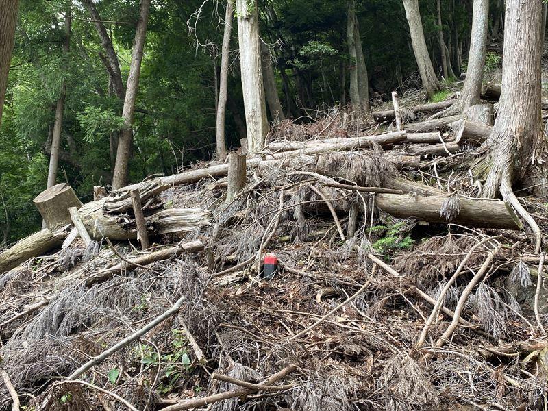 山林物件 神奈川県足柄郡山北町 尾根境界