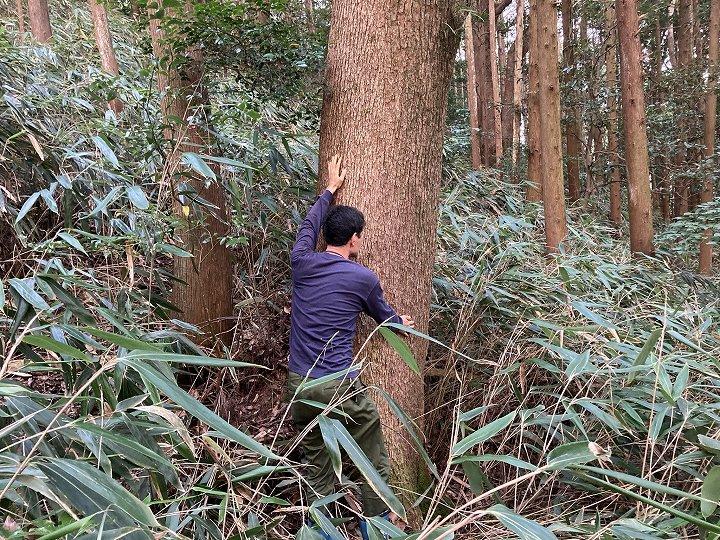 山林物件 静岡県熱海市 クスノキの大径木
