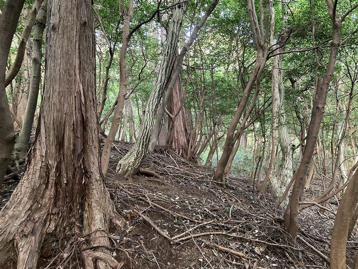山林物件 静岡県熱海市 北西側境界付近