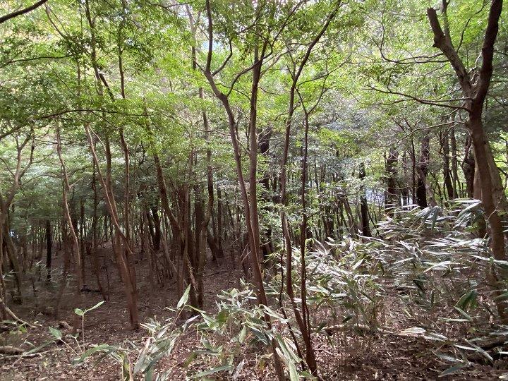 山林物件 静岡県熱海市 雑木